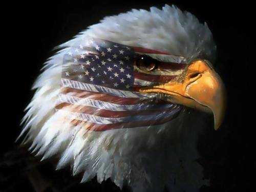 eagle with flag over eye